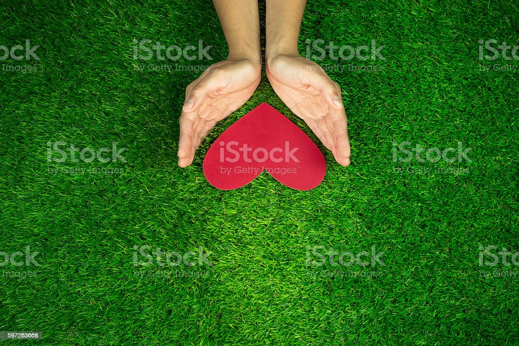 Hands keeping red heart on the green grass background stock photo