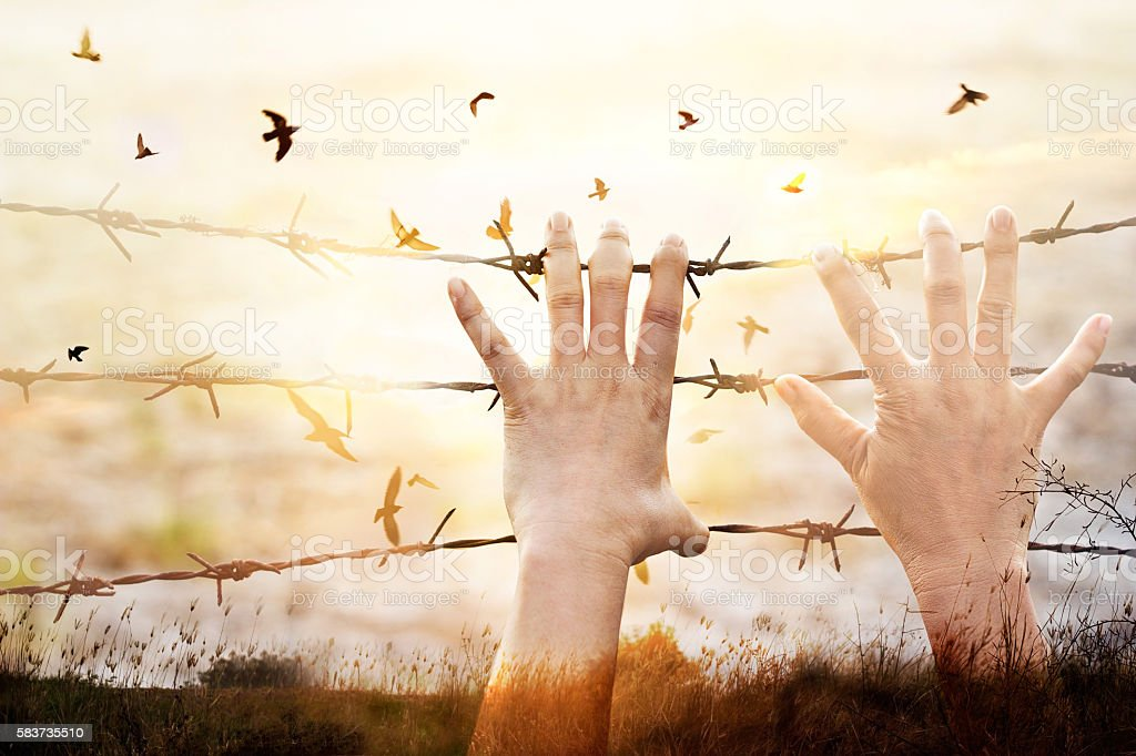 Hands of wire prison with bird flying on sunset background stock photo