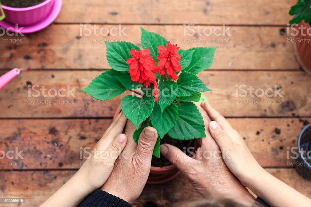 Hands of young and adult holding new flower in pot stock photo