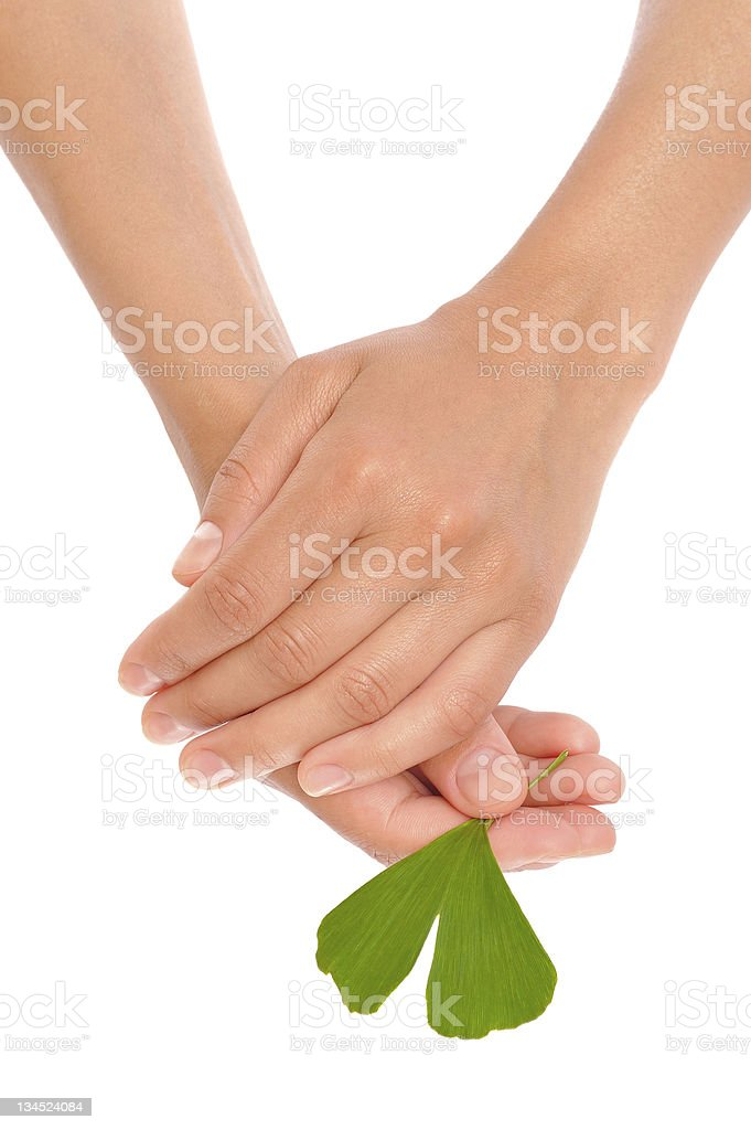 Hands of young woman holding ginkgo leaf royalty-free stock photo