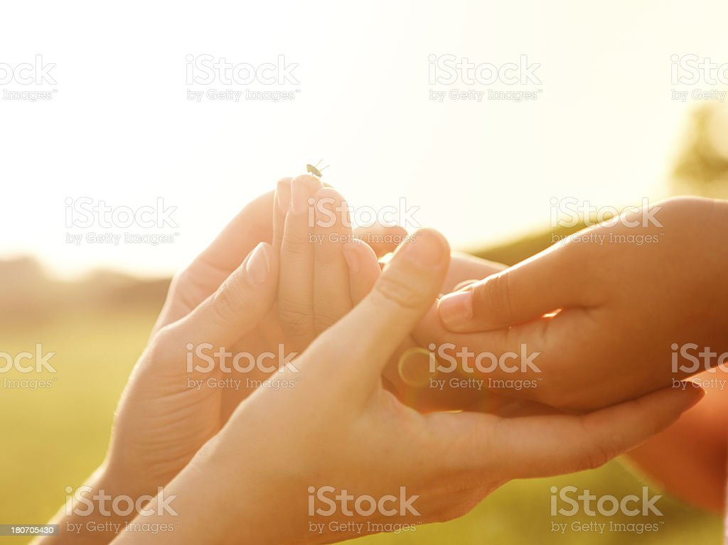 Hands. royalty-free stock photo
