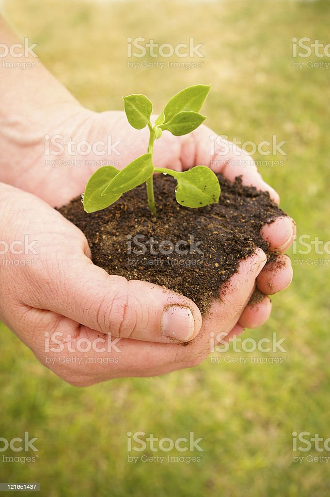 hands plant lateral II royalty-free stock photo