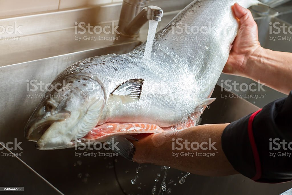 Hands washing big fish. stock photo