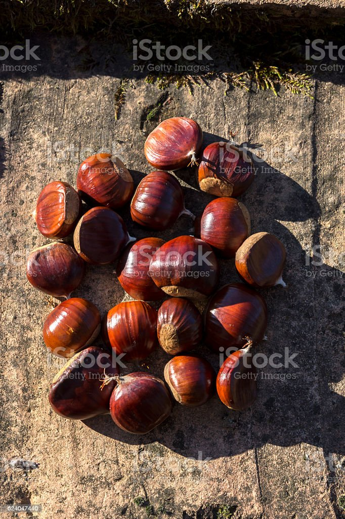 hands with chestnuts stock photo