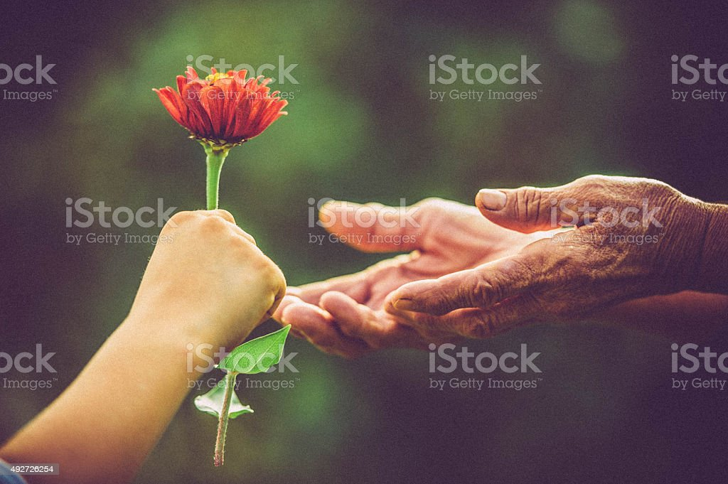 Hands With Flowers stock photo