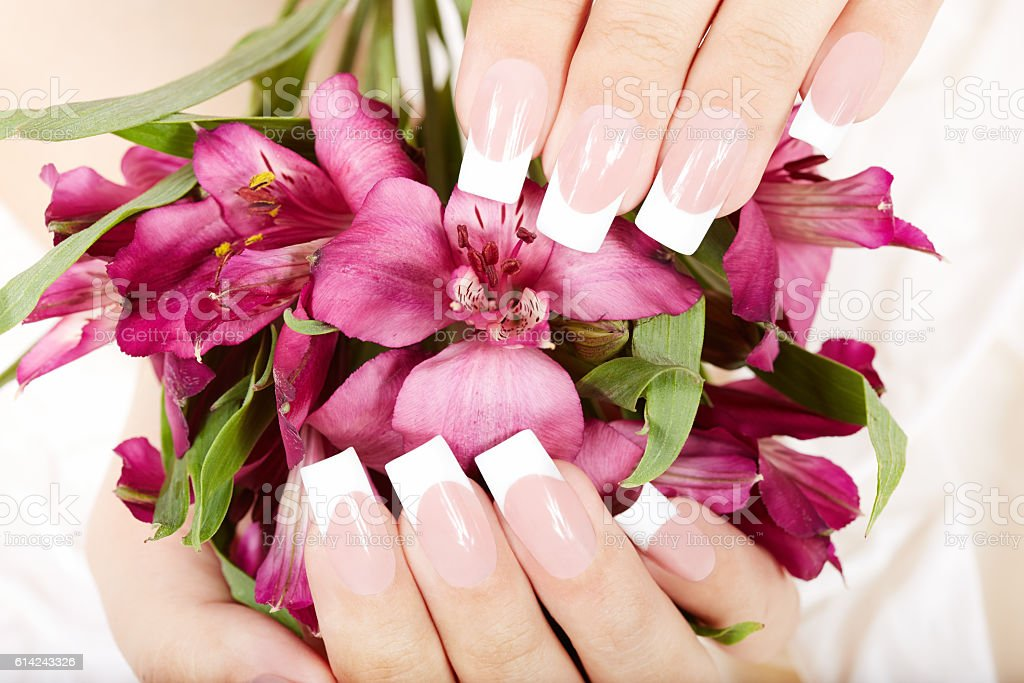 Hands with long artificial french manicured nails and Alstroemeria...