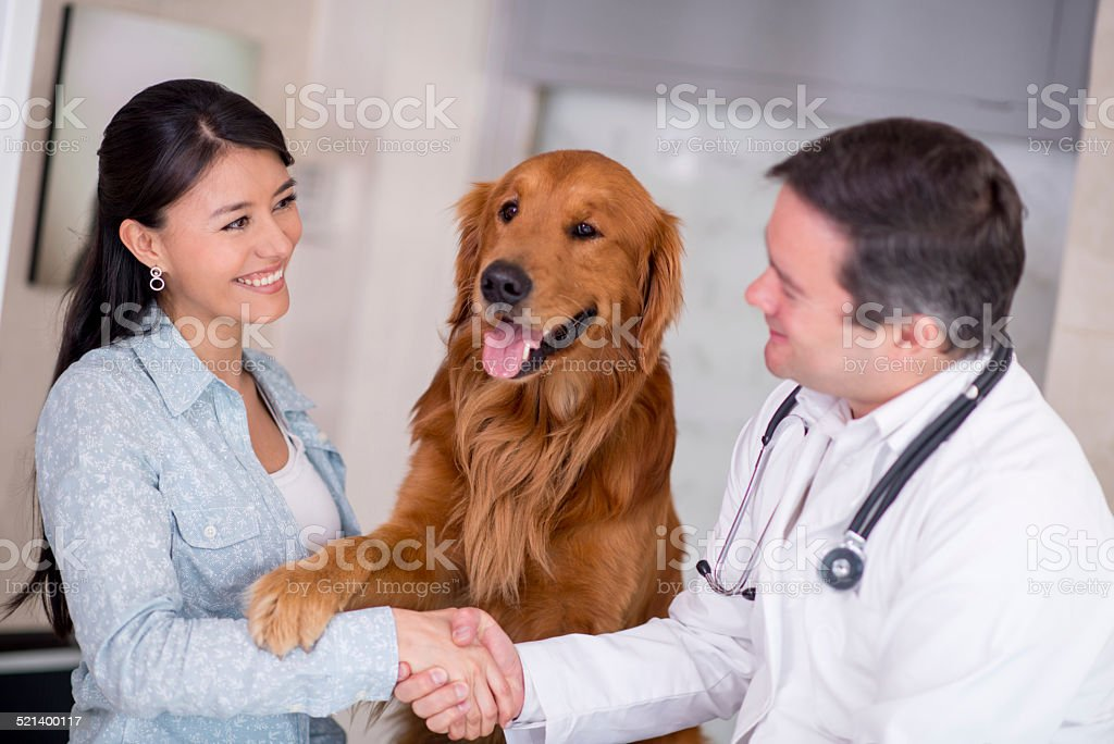 Handshake at the vet stock photo