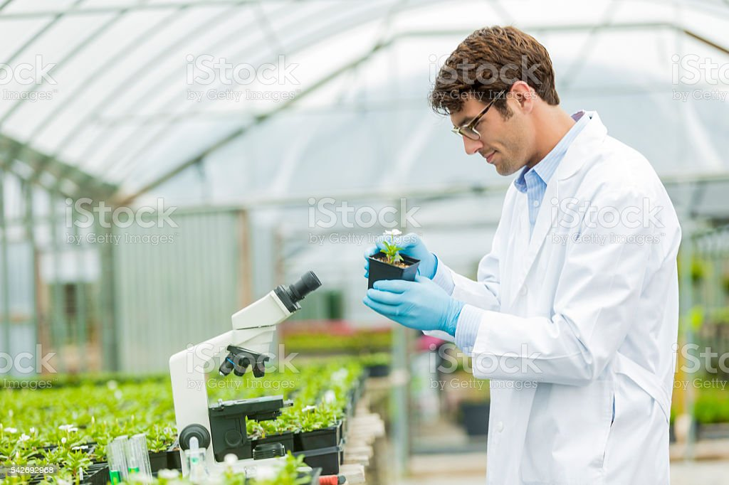 Handsome biologist studying flowers stock photo