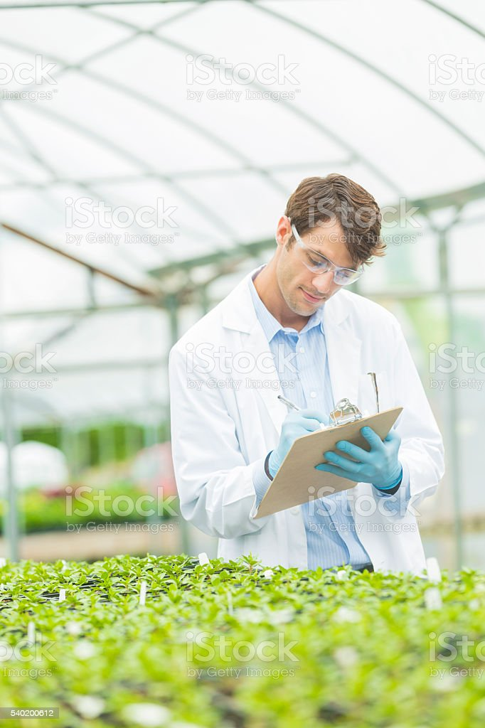 Handsome biologist studying plant growth stock photo
