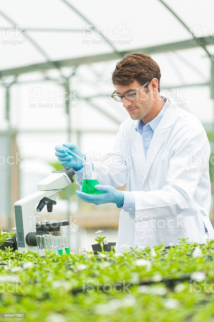 Handsome botanist concetrating stock photo