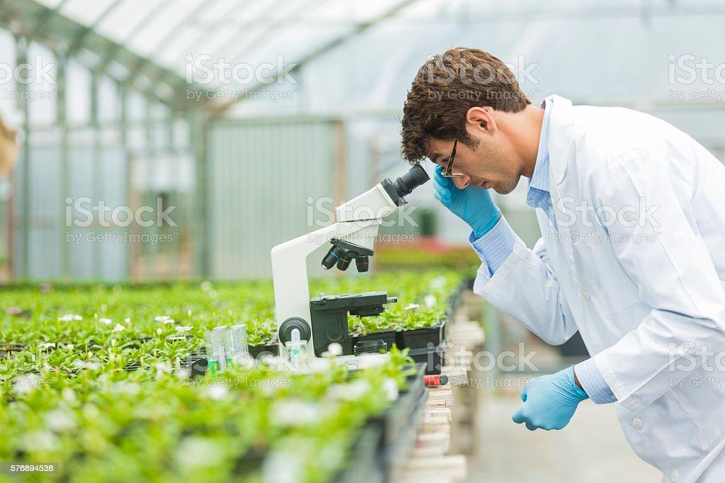 Handsome botanist looking into microscope stock photo