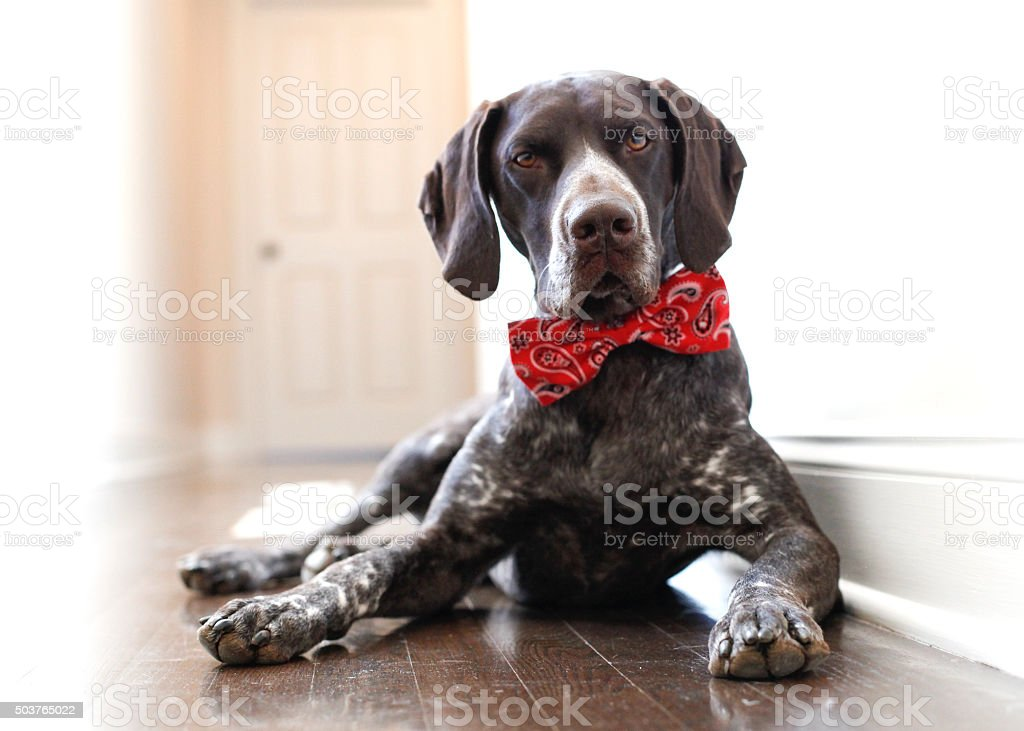 Handsome in my Bow tie stock photo