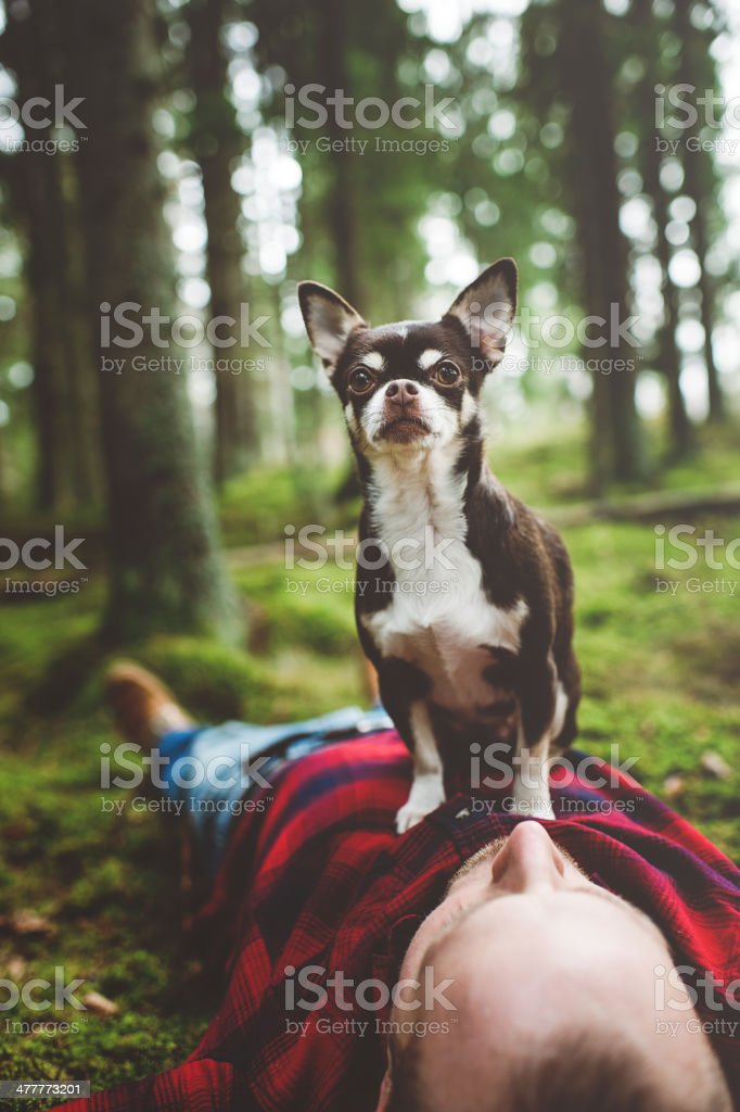 Handsome man lying down in nature with dog on top stock photo