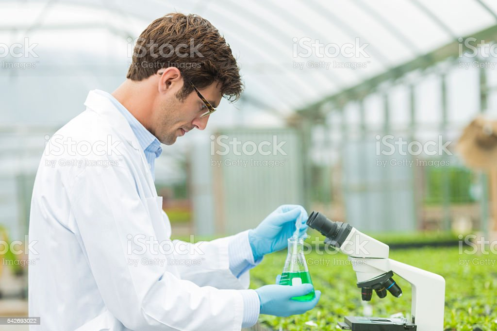 Handsome scientist at test lab for plants stock photo