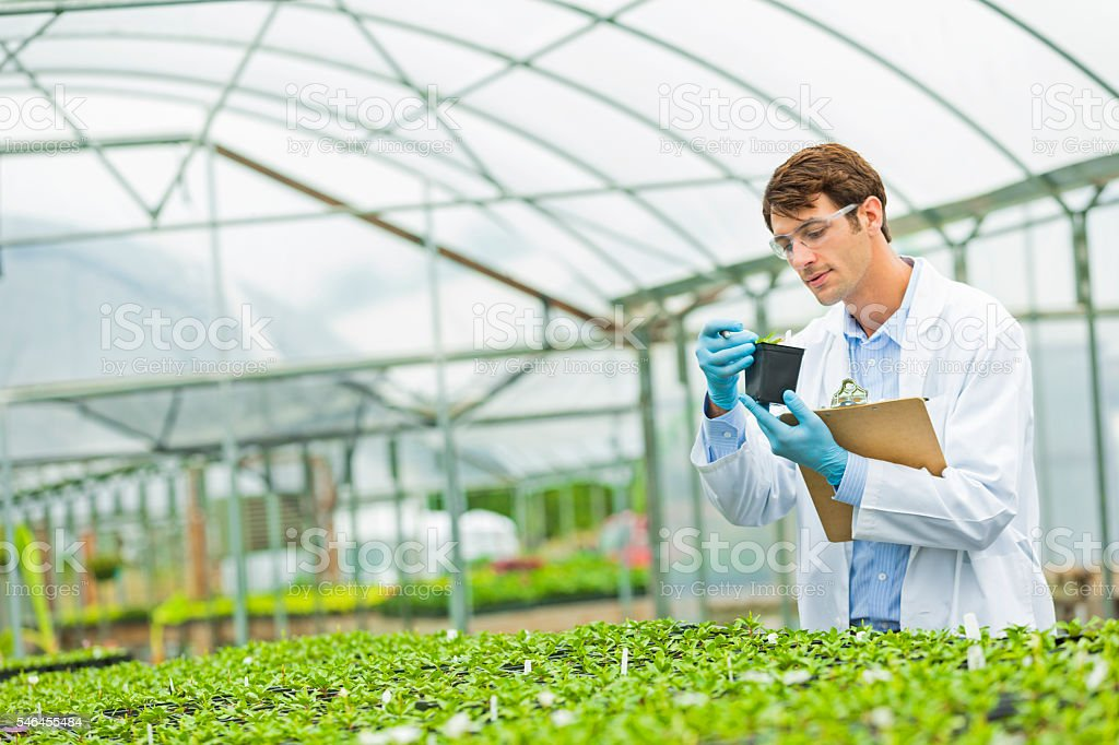 Handsome scientist working in a greenhouse stock photo