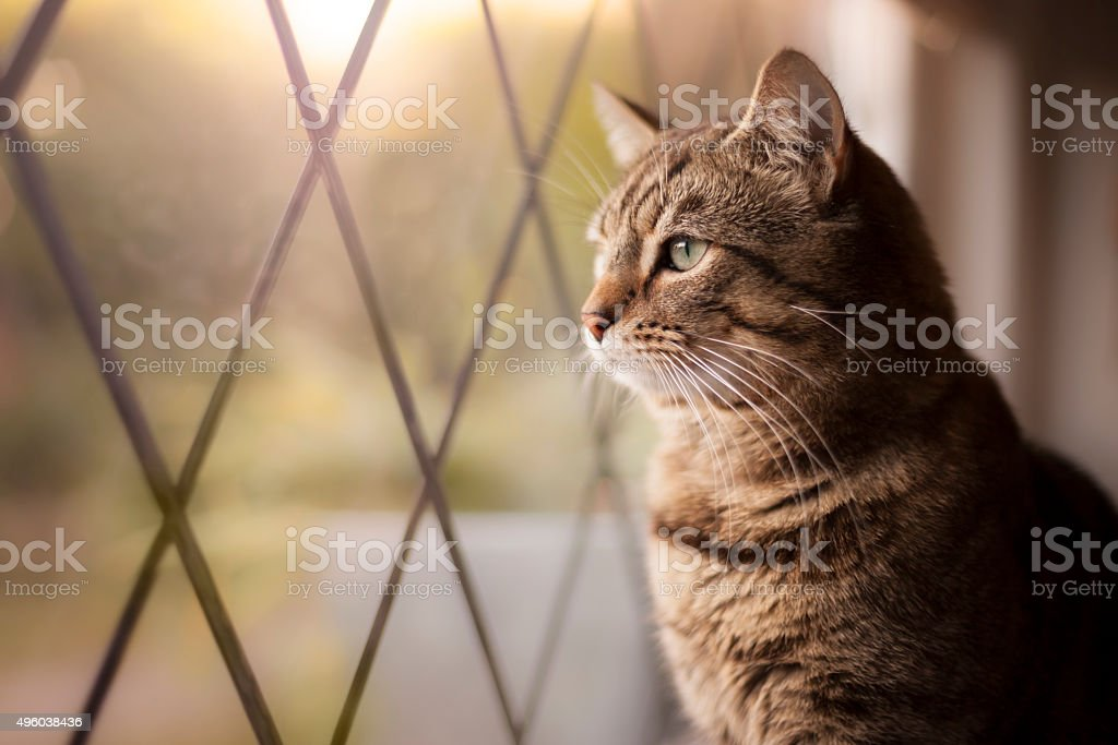 Handsome tabby cat sat by a window stock photo