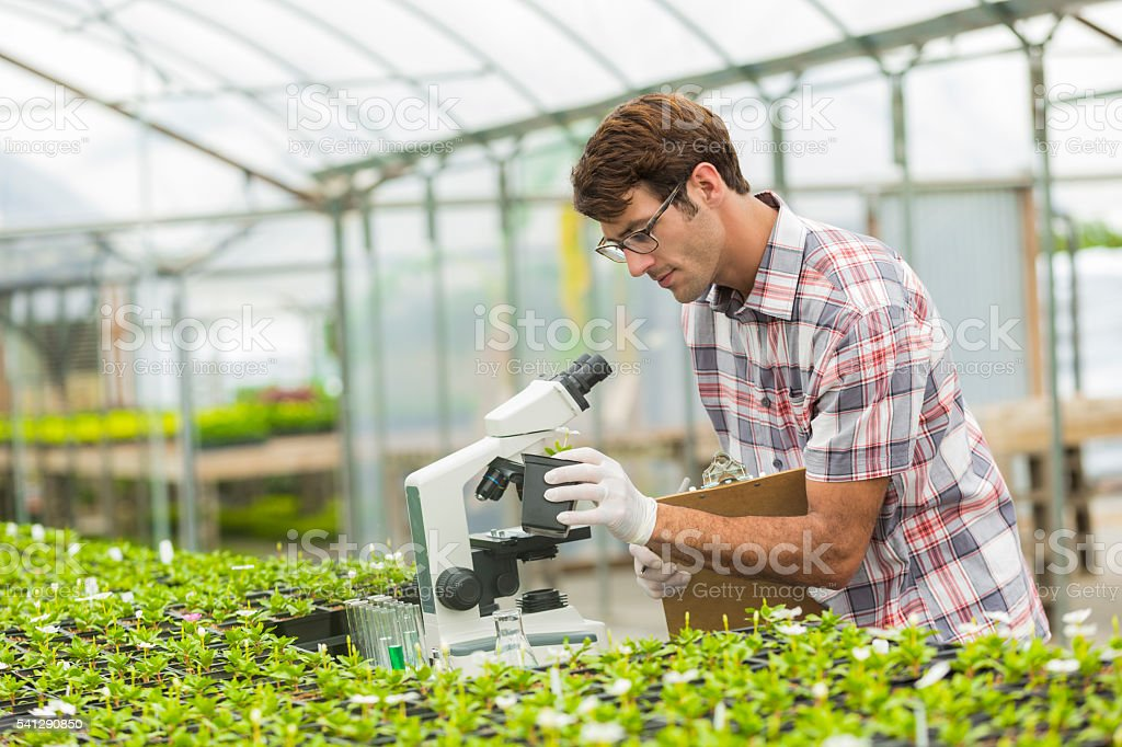 Handsome young biologist working in the lab stock photo