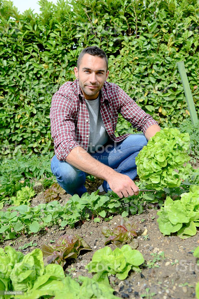 handsome young gardener growing organic bio vegetables stock photo