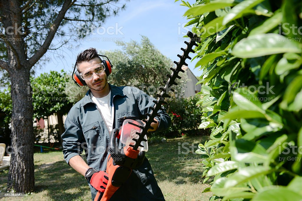 handsome young man gardener trimming hedgerow in a park outdoor stock photo
