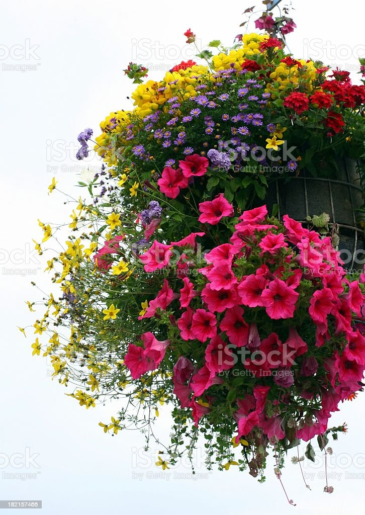 Hanging basket filled with lots of colorful flowers stock photo