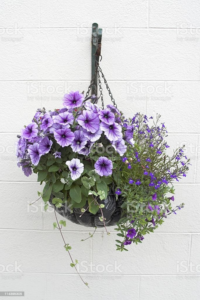 Hanging Basket Of Flowers On White Wall stock photo