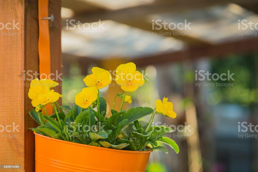 Hanging basket of yellow flowers stock photo