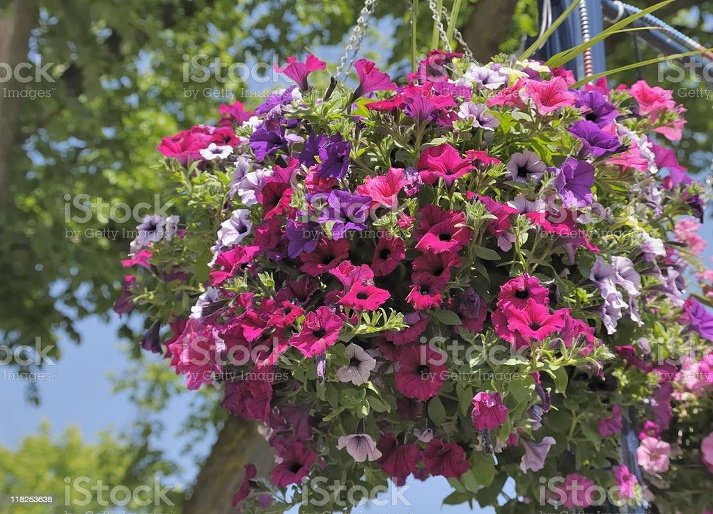 Hanging Basket stock photo