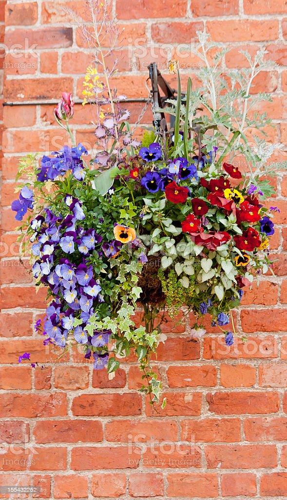 Hanging basket. stock photo