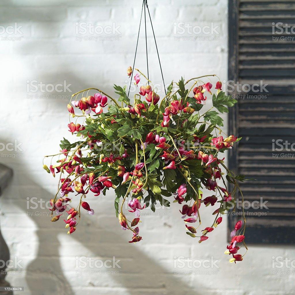 Hanging Basket royalty-free stock photo