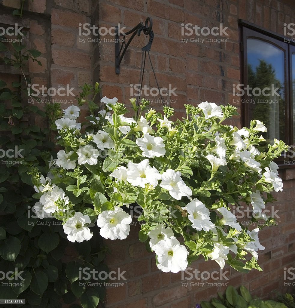 hanging basket royalty-free stock photo