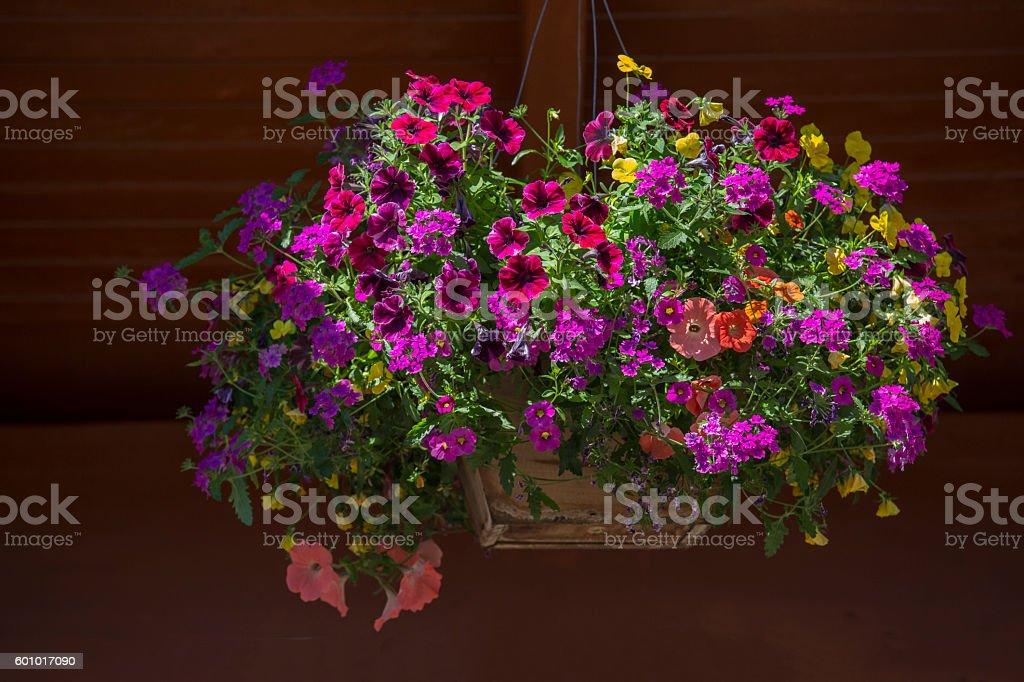 Hanging basket - Stock image stock photo