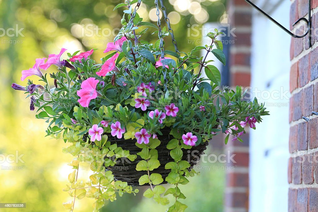 Hanging basket with flowers stock photo