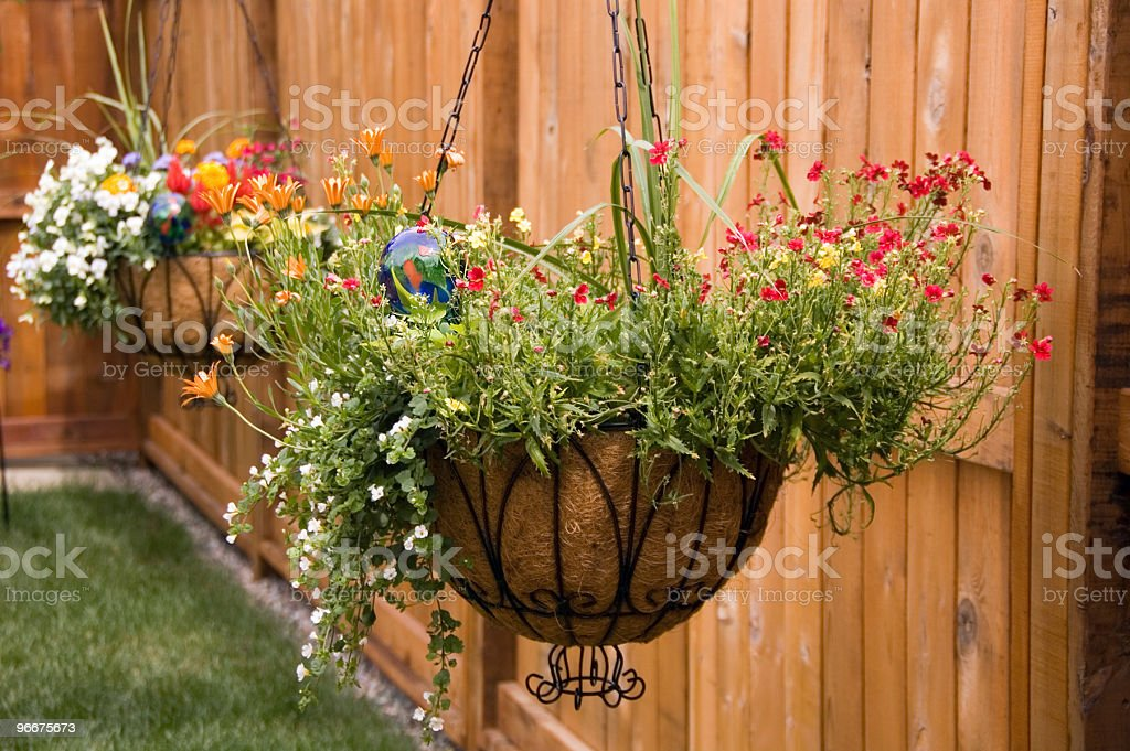 Hanging baskets in back yard stock photo