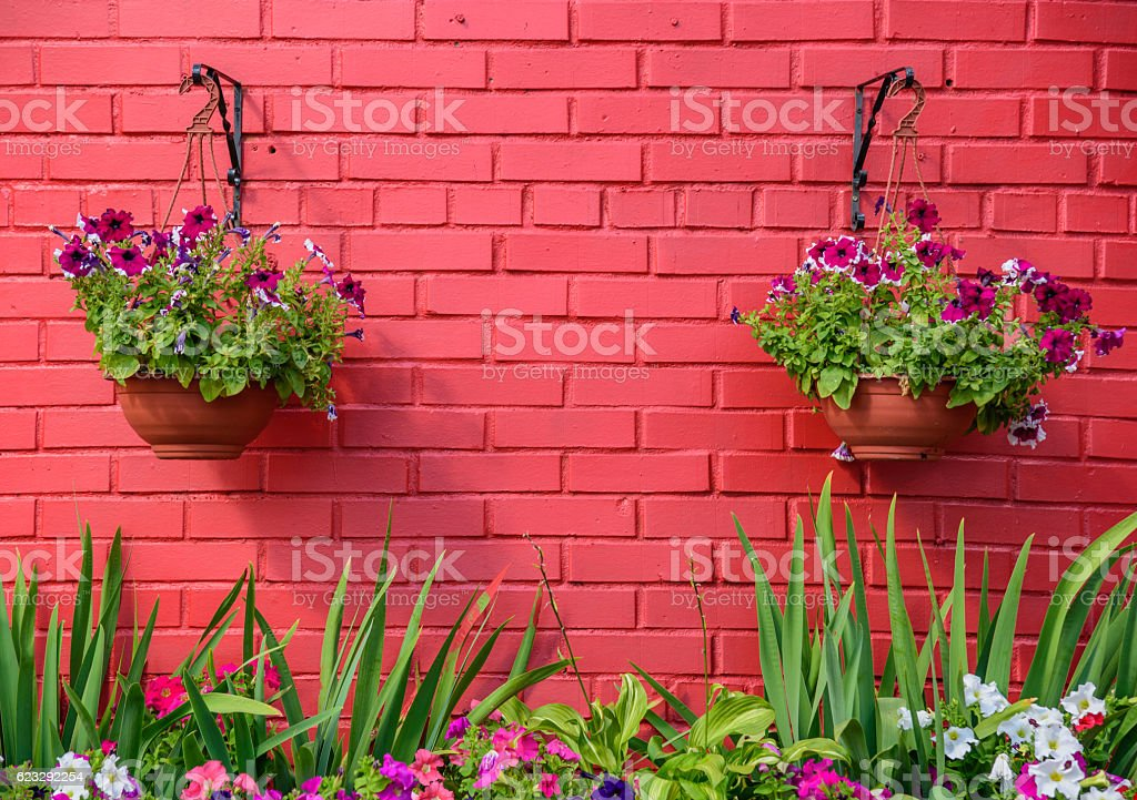 Hanging baskets of flowers against red wall. stock photo