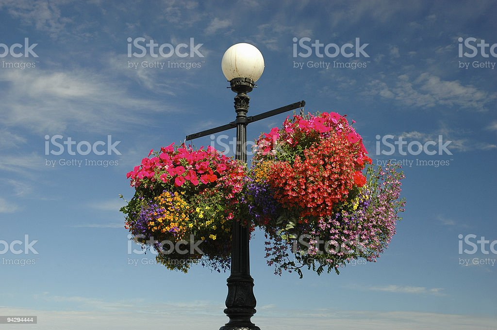 Hanging Baskets stock photo