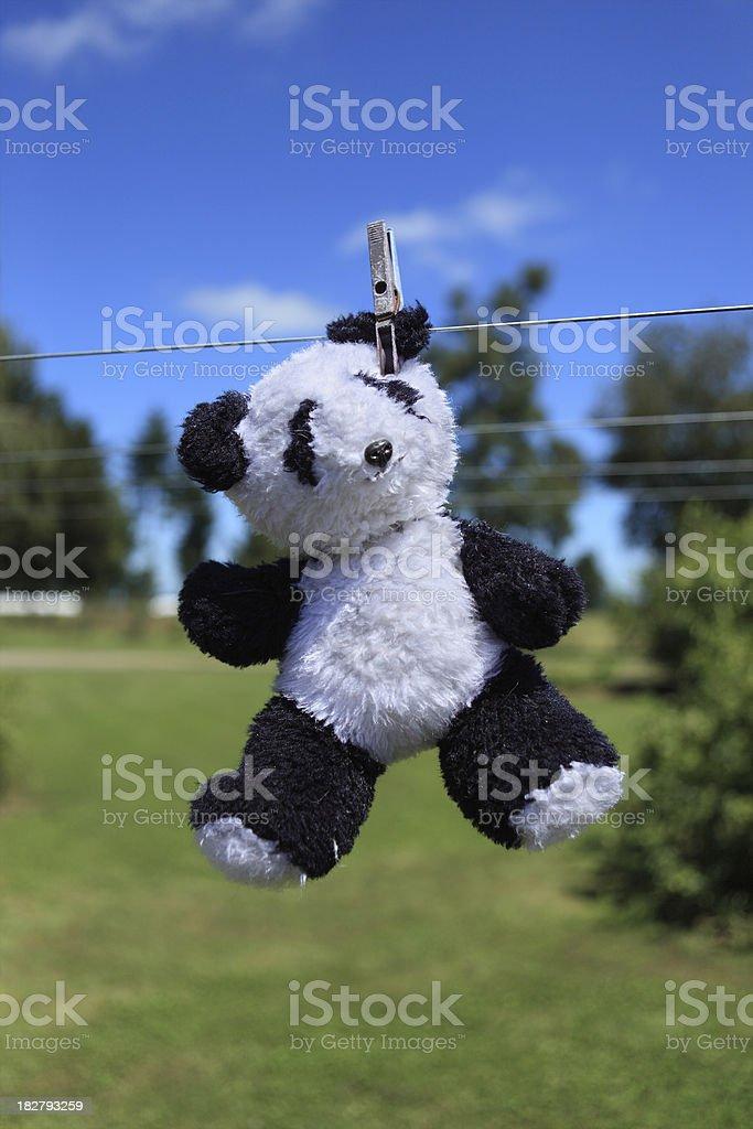 Hanging Bear stock photo