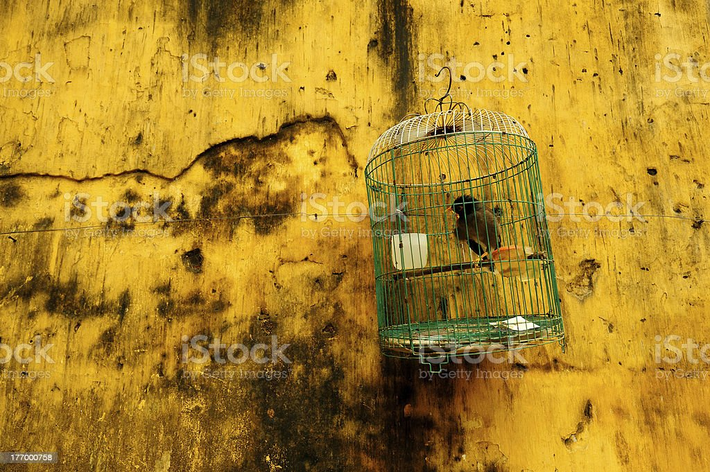Hanging Bird Cage Against Yellow Wall royalty-free stock photo