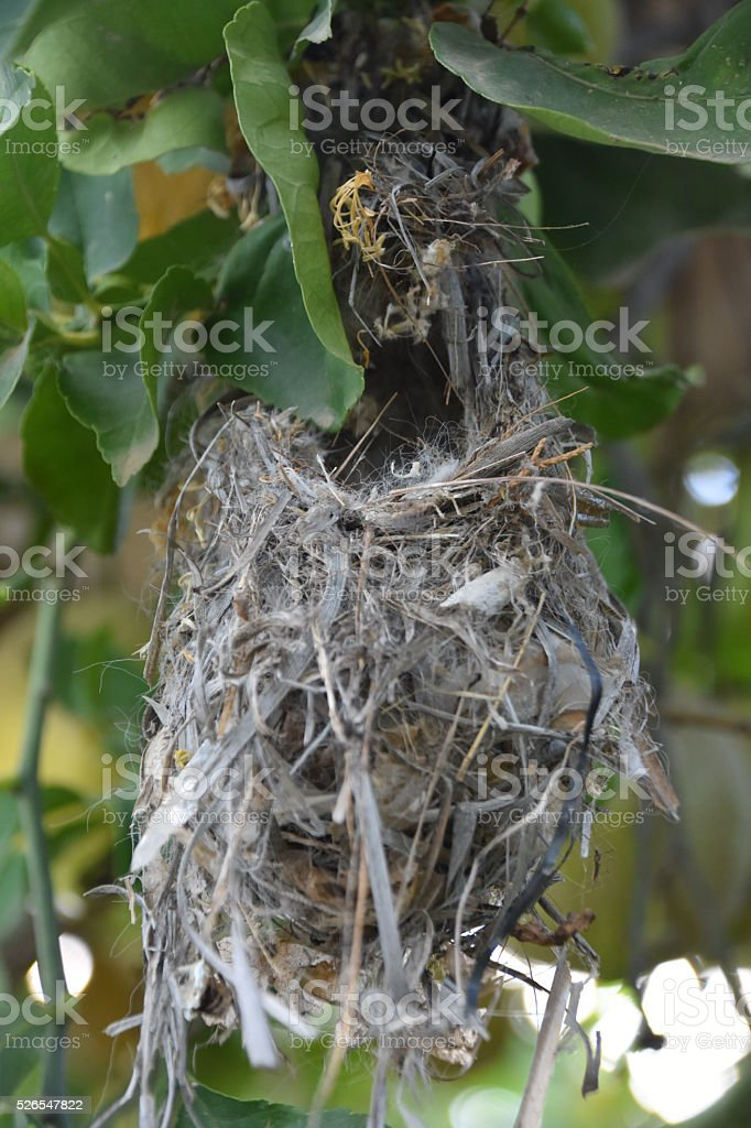hanging Bird Nest close-up stock photo