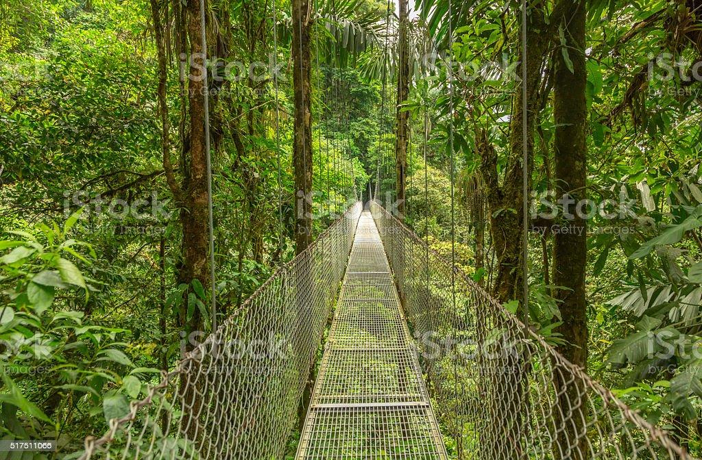 Hanging bridge in Costa Rica stock photo