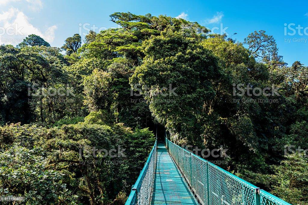 Hanging Bridges in Cloudforest - Costa Rica stock photo
