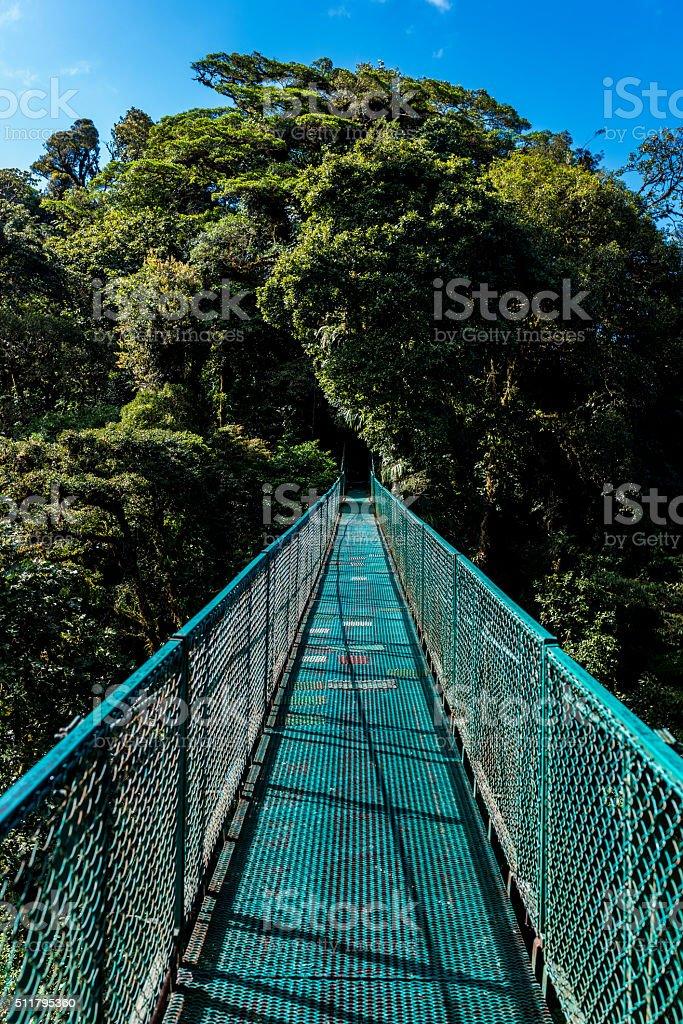 Hanging Bridges in Cloudforest stock photo
