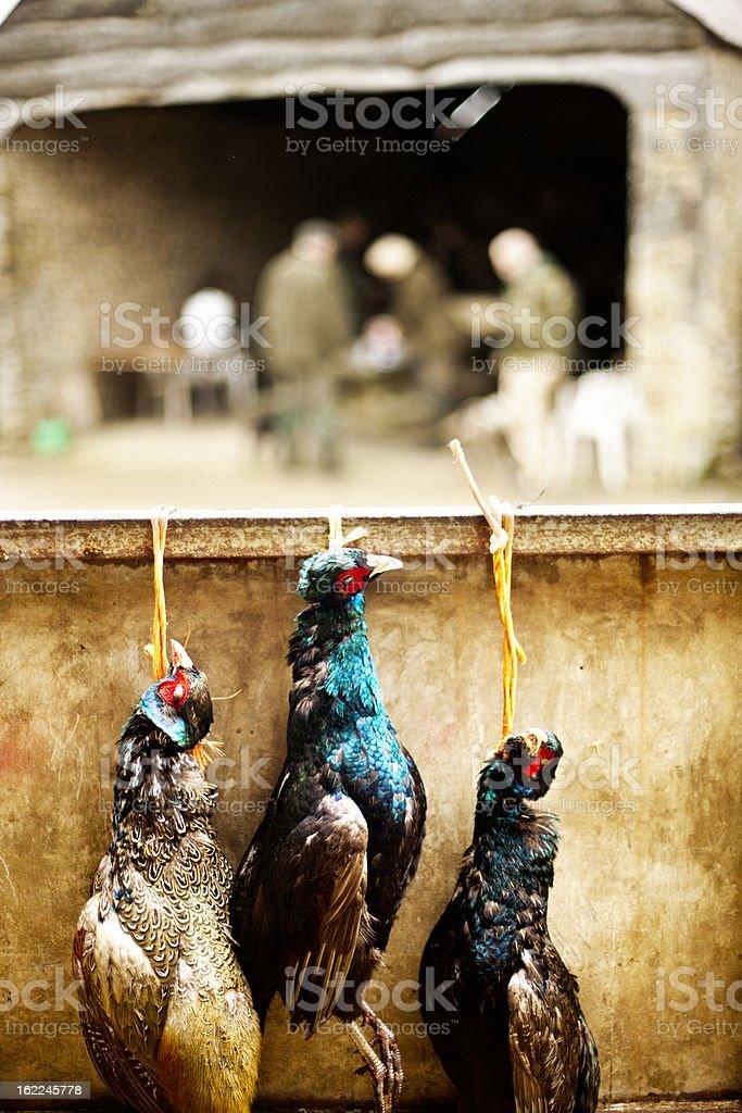 Hanging cock pheasants royalty-free stock photo