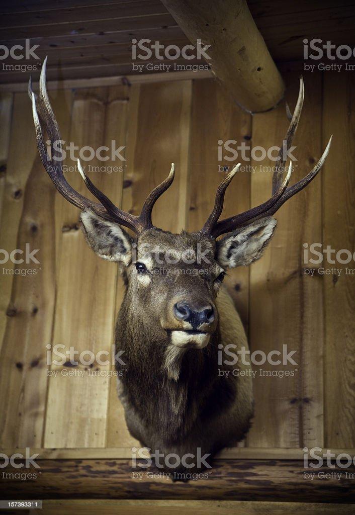 Hanging Deer Head on Wood Cabin Wall stock photo