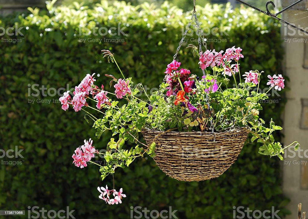 Hanging Flower Basket stock photo