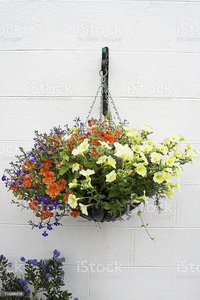 Hanging flower pot with bright flowers stock photo