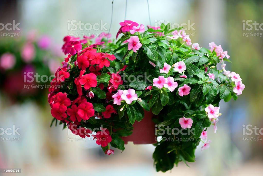 Hanging flowers stock photo