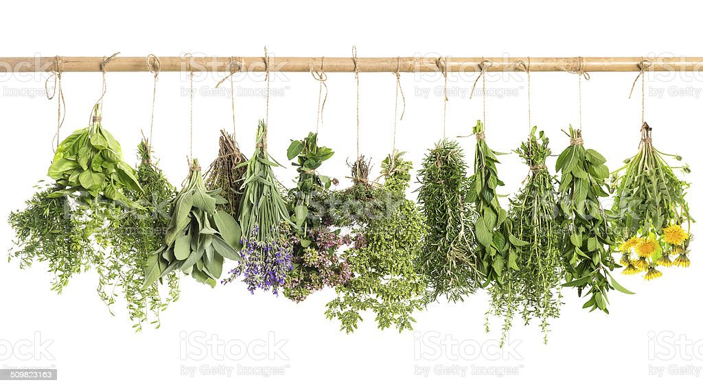hanging fresh herbs. basil, rosemary, sage, thyme, mint, oregano stock photo