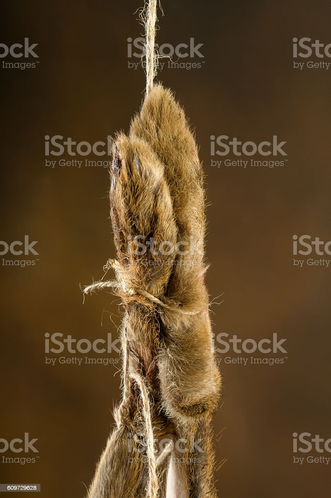 Hanging hare feet stock photo