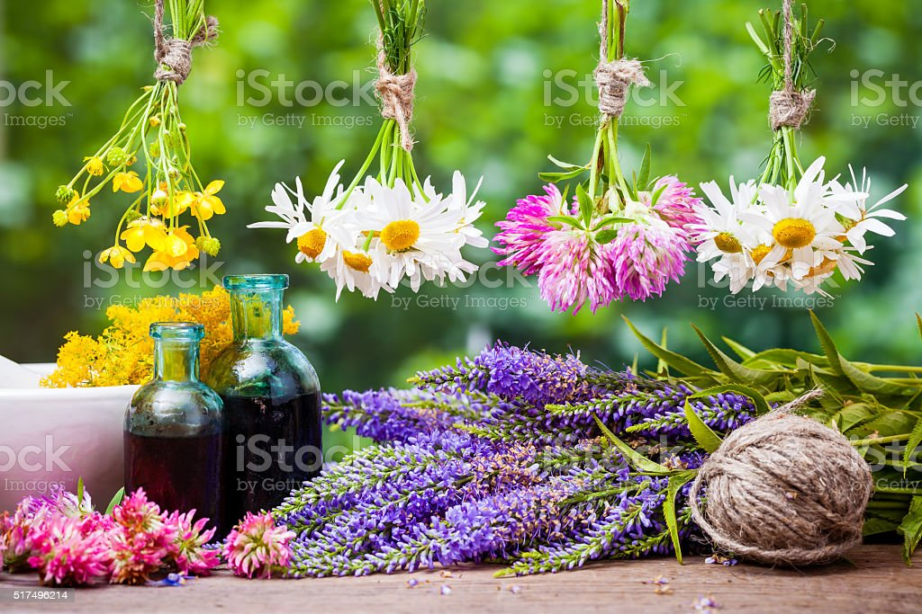 Hanging healing herbs bunches stock photo
