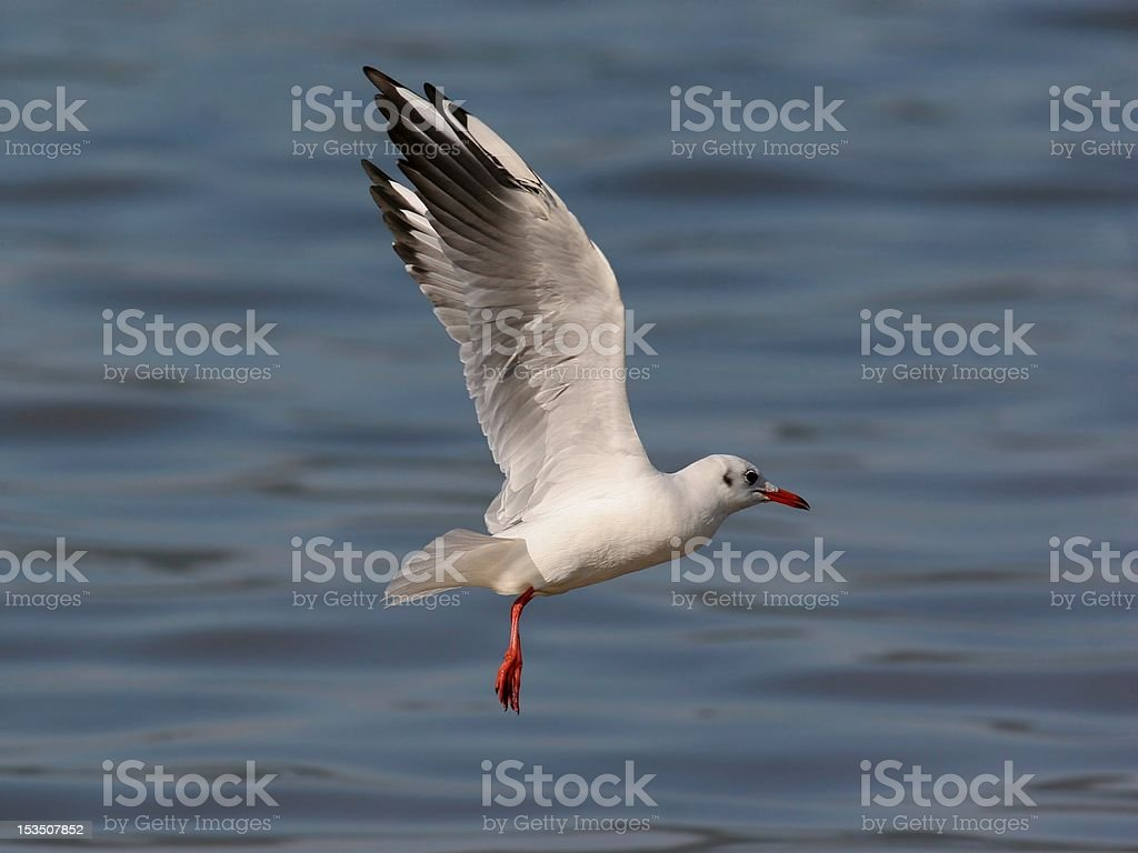 Hanging in the air royalty-free stock photo